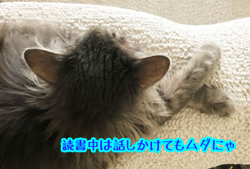 IMG_5382.jpg